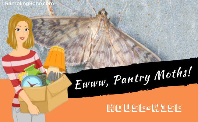 Ewww, Pantry Moths!