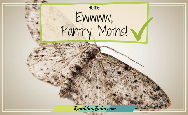 Ever heard of Pantry Moths? You've probably run across them in your food stuffs at some point. Pesky little things! #pests #home #RamblingBoho.com
