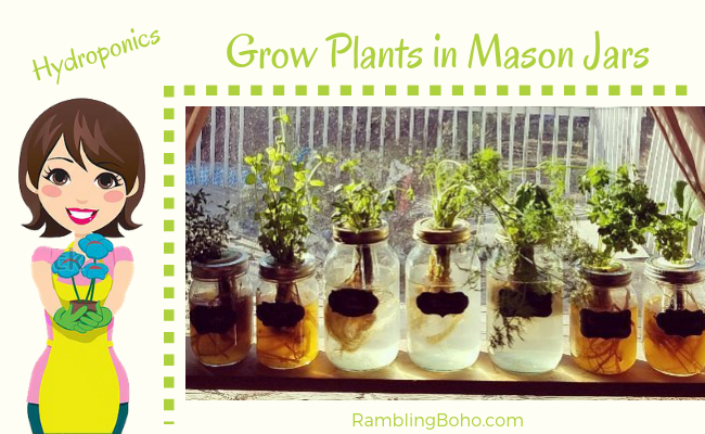 Grow Plants in Mason Jars