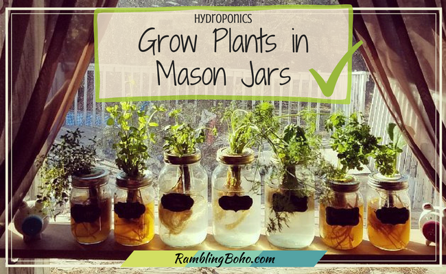 Yes! You CAN grow all kinds of herbs & vegetables in mason jars, even in winter. The easiest hands-off method ever! #gardening #hydroponics RamblingBoho.com